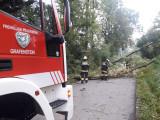 Bäume blockierten Straße
